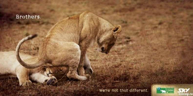 Класна реклама. Ми не такі вже й різні (5 фото)