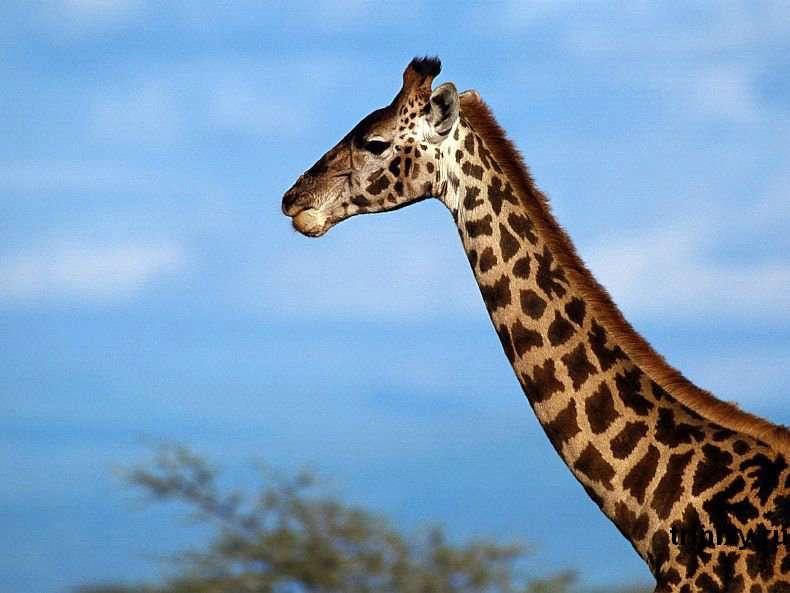Тварини, які народилися в зоопарках світу за останні місяці (95 фото)