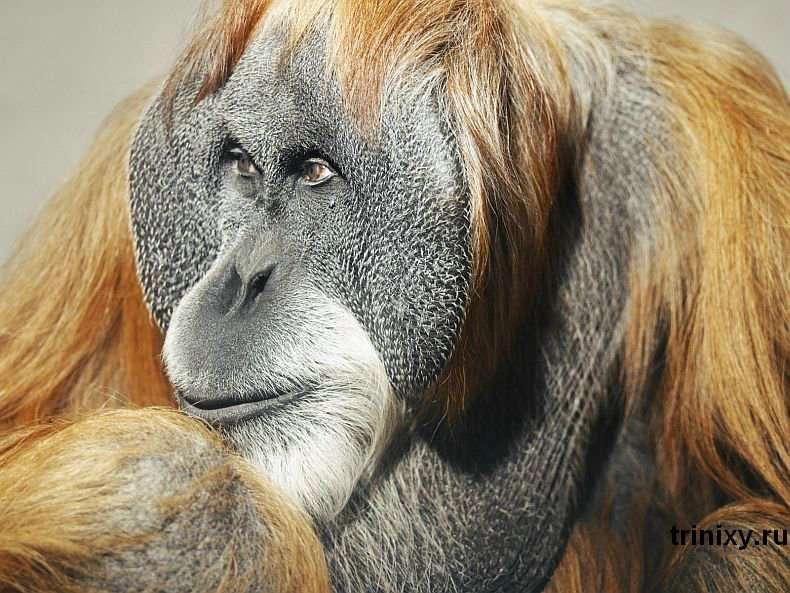 Класні фотографії тварин (60 фото)