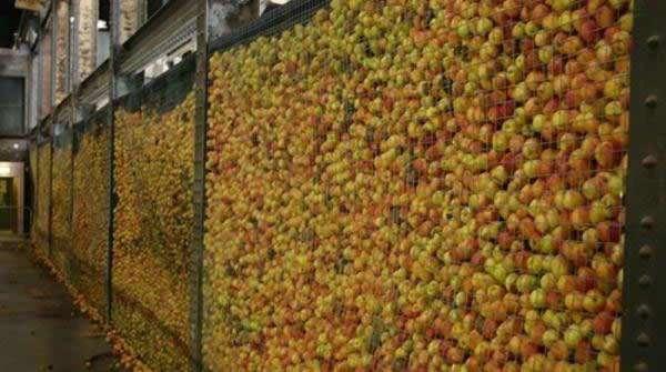 Яблучний фестиваль у Швеції 2008 (30 фото)