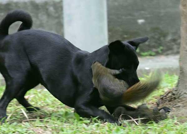 Дуже смілива білка (5 фото)