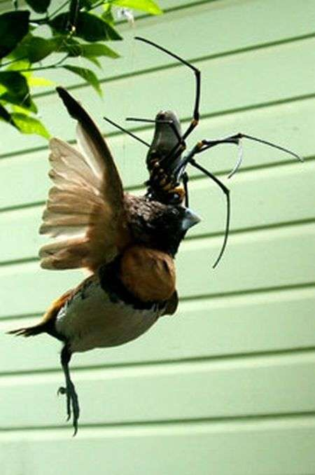 Пташку шкода ;( (4 фото)