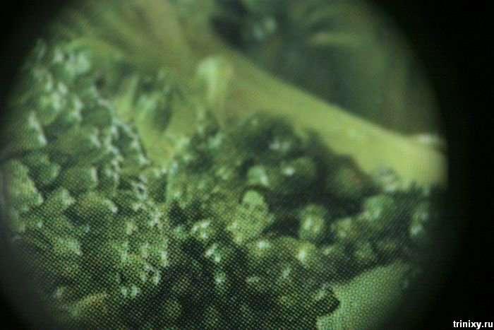 Упаковка брокколі (3 фото)