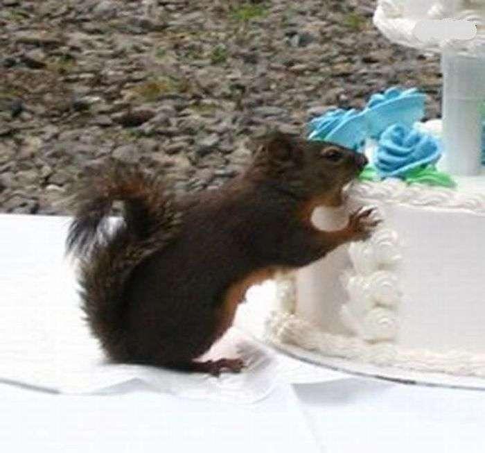 Чому не можна залишати весільний торт без нагляду (3 фото)