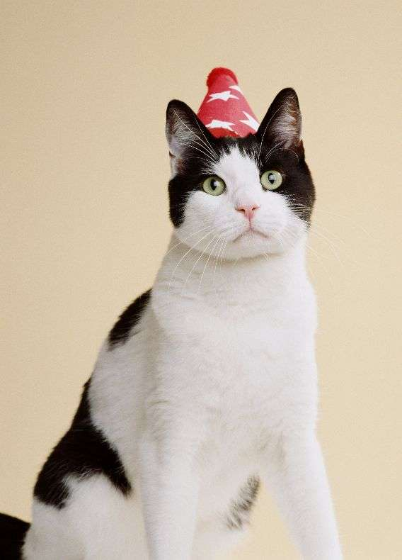 Відмінна добірка котів (130 фото)