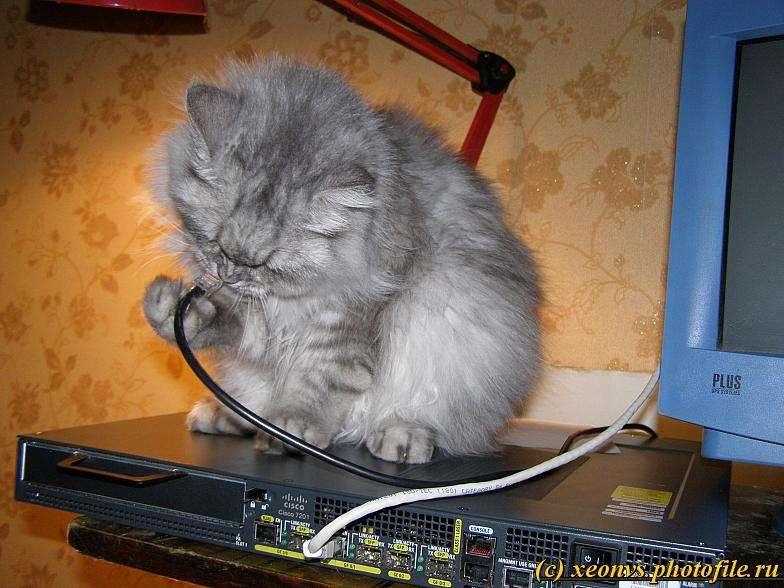 Наша кицька любить Cisco (12 фото)