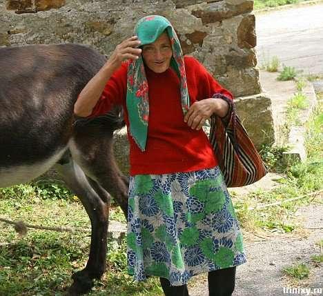Корова потрапила ;( (5 фото)