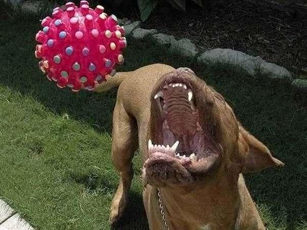 Прикольна собачка ) (14 фото)