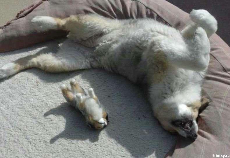 Акція протесту проти відстрілу безпритульних собак в Москві (16 фото + текст)
