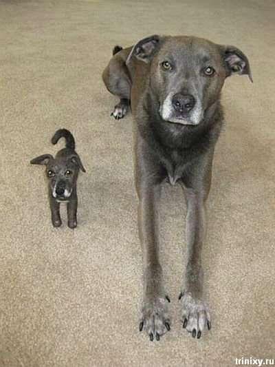 Рентген собак, проглотивших різні предмети (15 фото)