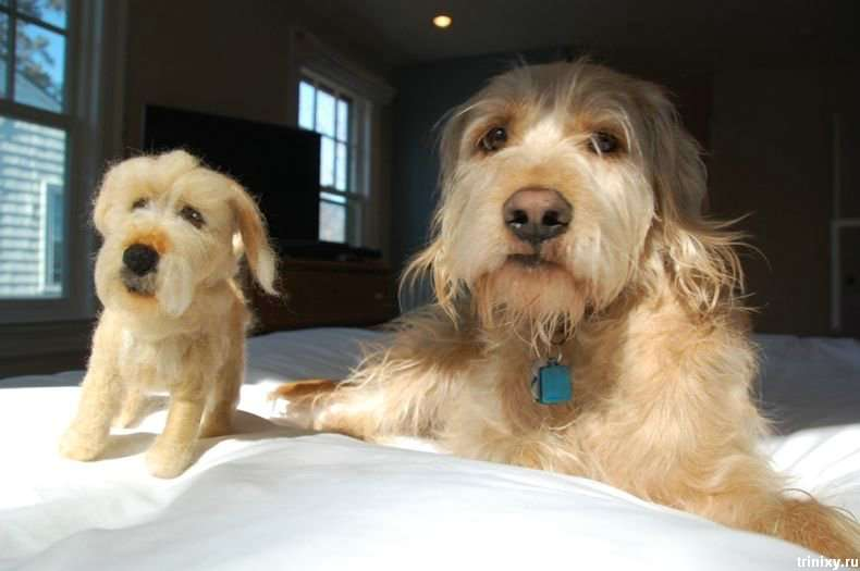 Собаки і їх іграшкові копії (21 фото)