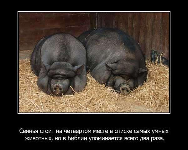 Забавні факти про тварин (25 фото)