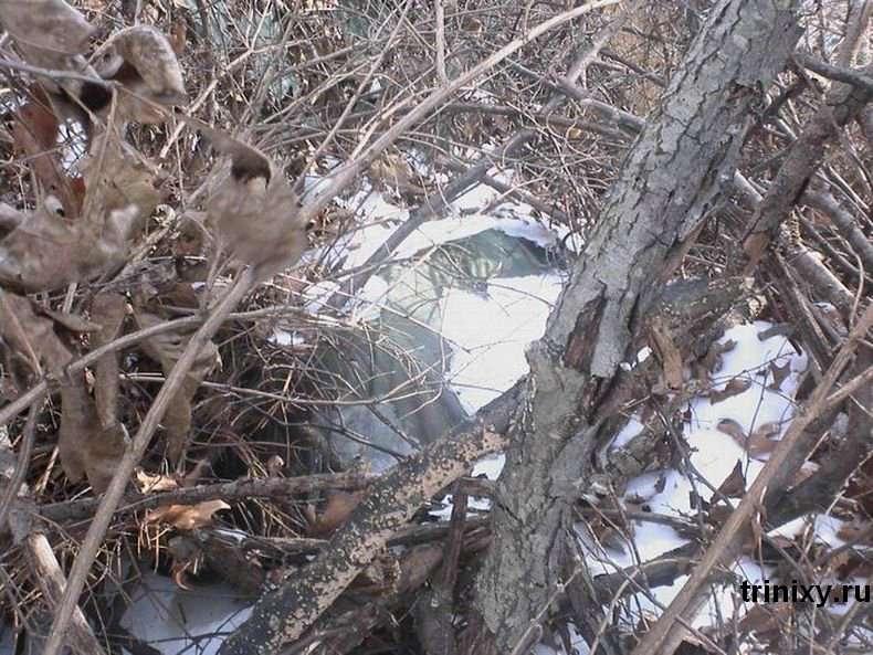 Дівчина-фрілансер живе в лісі (13 фото)
