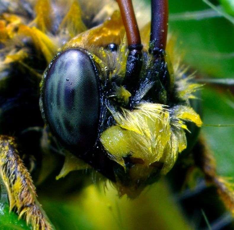 Макро-комахи (45 фото)