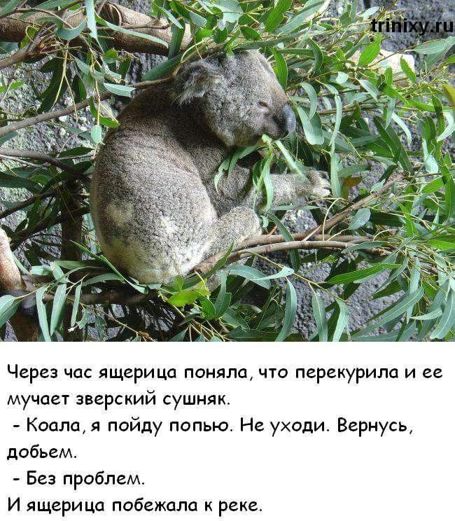 Як коала і ящірка косяк курили (7 картинок)