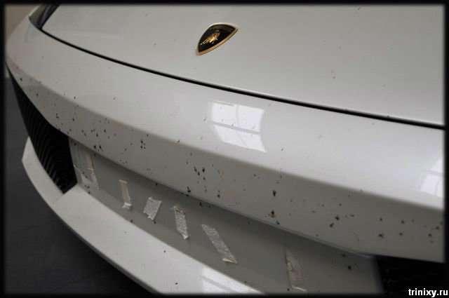 Дуже цікаве Lamborghini Gallardo (20 фото)