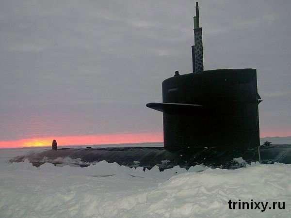 Нові друзі підводників )) (8 фото)