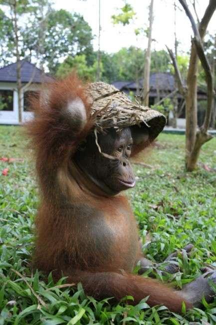 Притулок для маленьких орангутангів на Борнео (9 фото)