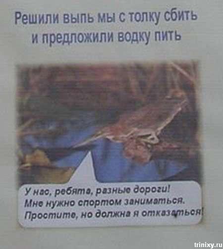 Плакати в парку (10 фото)