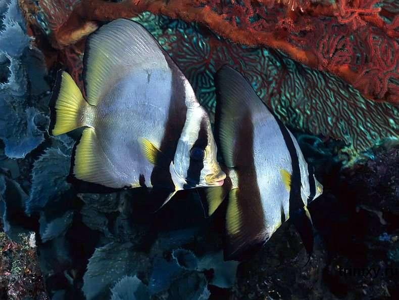 Підводний світ (101 фото)