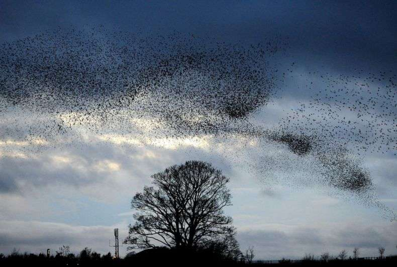 Небо, почорніле від скворцов (6 фото)