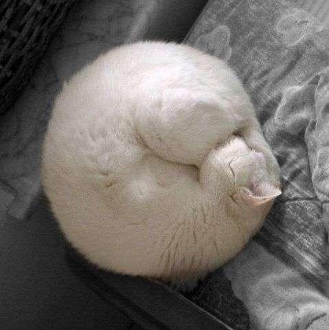 Солодких снів (87 фото)