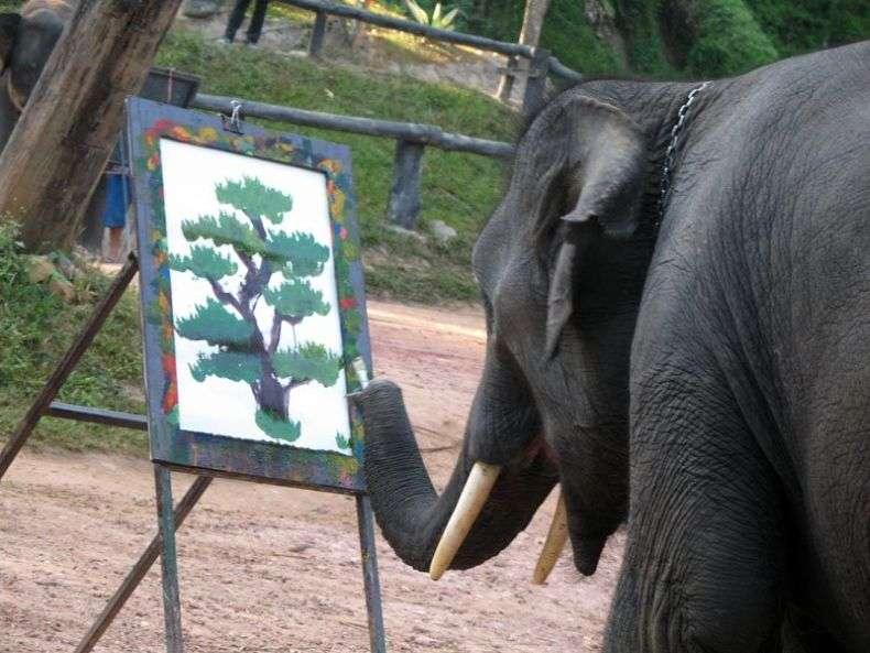 Слон-художник (7 фото)
