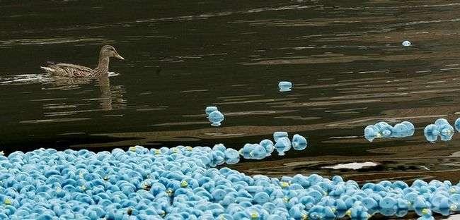 Качки в Темзі (9 фото)