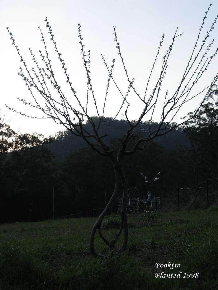 Красиві дерева (45 фото)