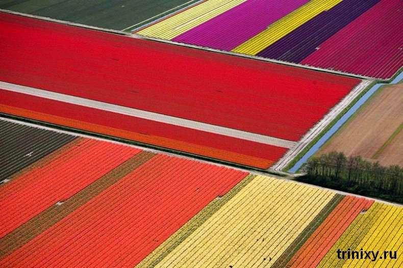 Краса. Поля тюльпанів в Голландії (23 фото)