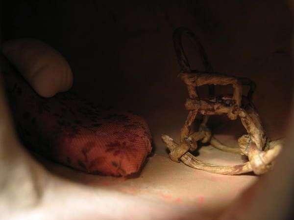 Саморобна гігантська равлик (26 фото)