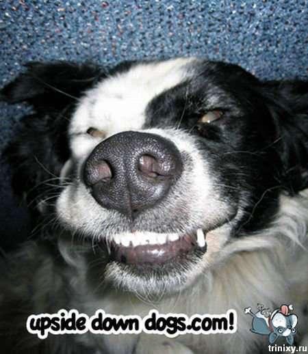 Собаки на спині (15 фото)