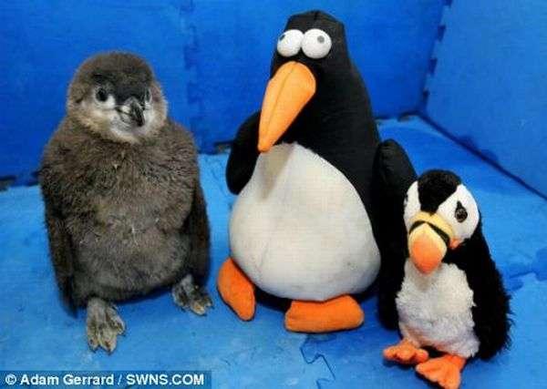 Ведмедик і пінгвін (21 фото)