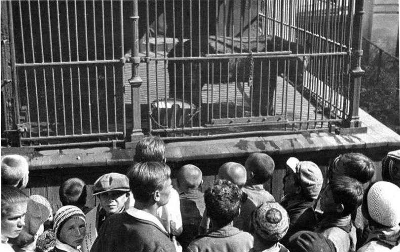 У Московському зоопарку 1920-50-х (з архіву Віри Чаплиной) (49 фото)