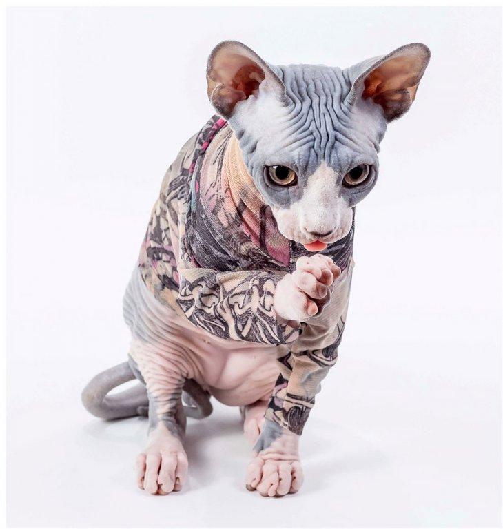 Стильная одежда для сфинксов с принтами татуировок Интересное