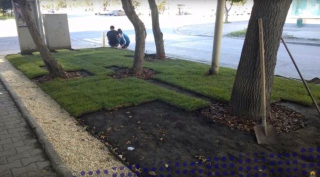 Коммунальщики перекопали экскаватором образцовый газон в Екатеринбурге. МиР