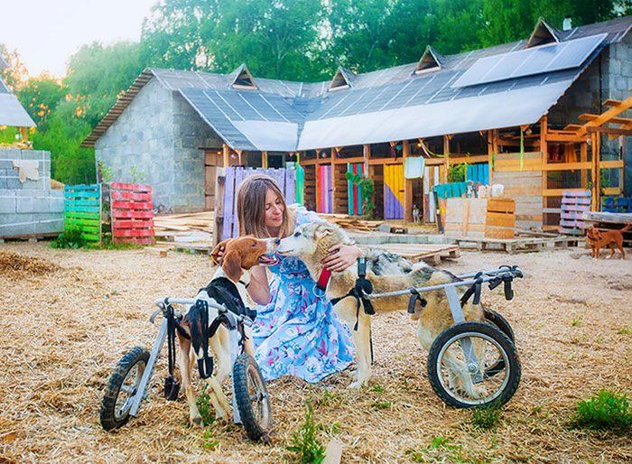 Москвичка и ее муж живут дикарями в сотнях километров от МКАД, чтобы заботиться о более сотни собак. МиР