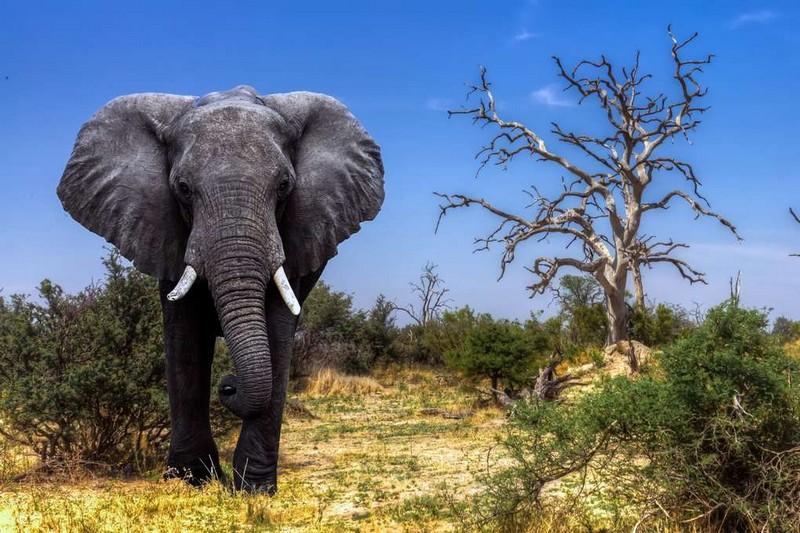 Самые крупные животные планеты Мир Животных