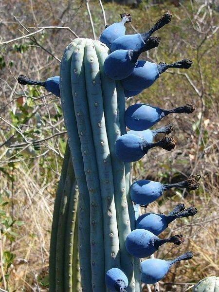 Чудо растения, которые где-то рядом с нами интересное
