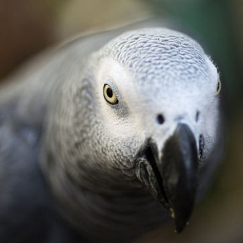 Попугай вылетел из окна и вернулся через 4 года… говорящим по-испански! истории из жизни