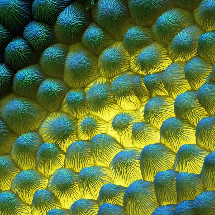 Чужие: цветы под микроскопом природа