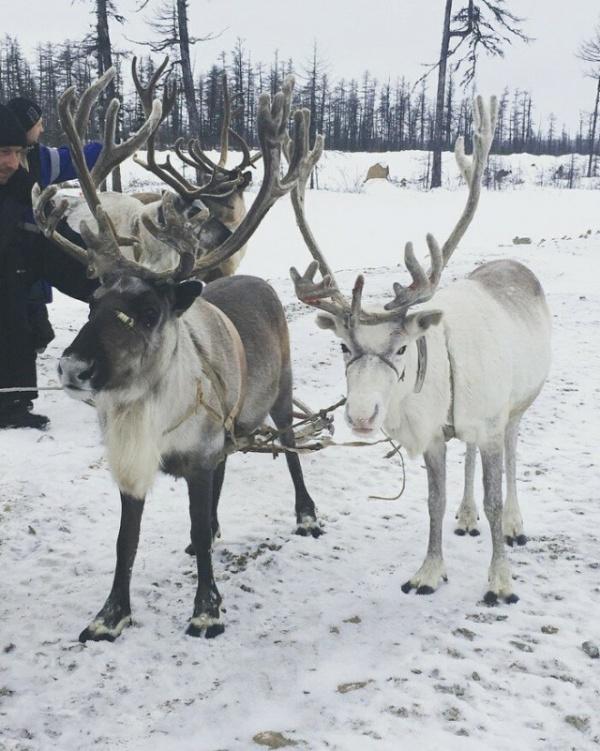 Интересные факты и фотографии из Якутии