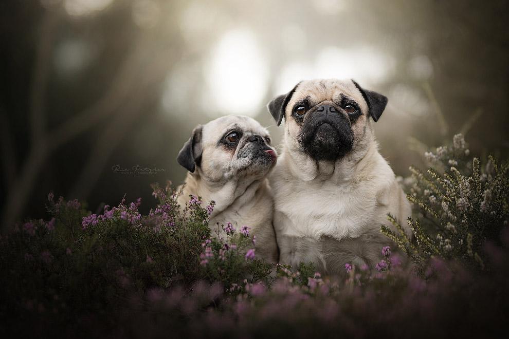 Собачьи портреты Портрет