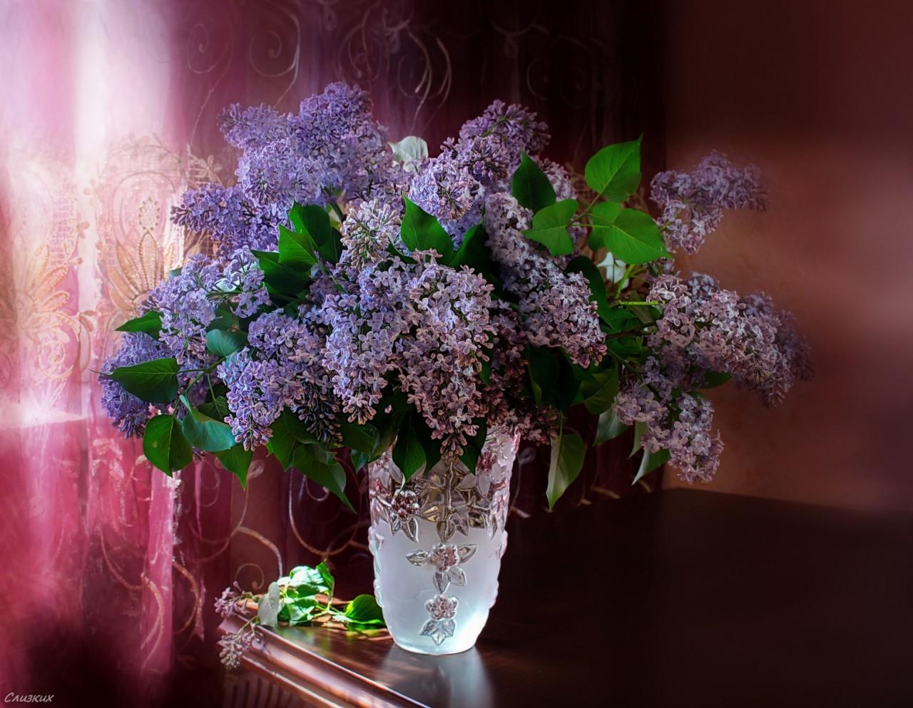 Симфонии нежного утра, Сонаты расцветшей сирени... Фотография
